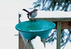 WBU Heated Bird Bath